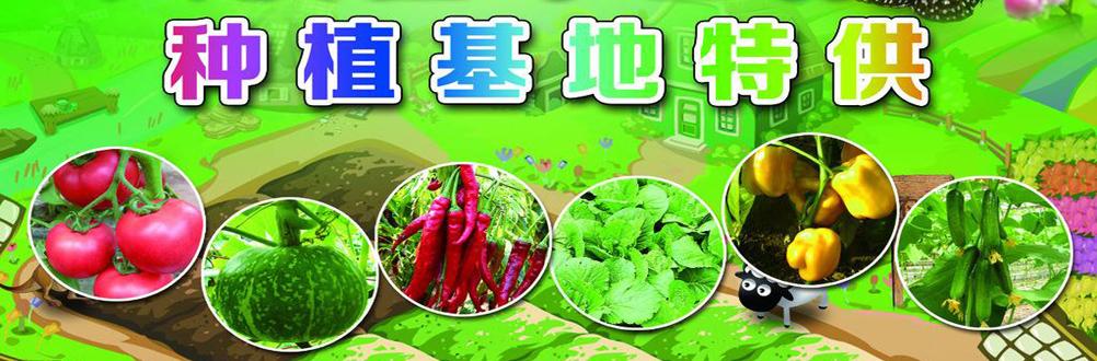 广州蔬菜配送公司